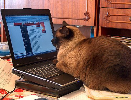 Aa cat on line