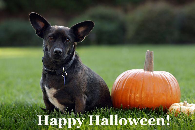 1153 Happy Halloween