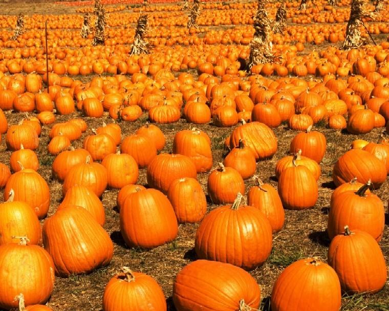 _dsc0036_pumpkins_copy_6