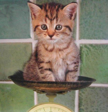 Kitteninscale