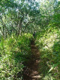 Jungle_pathjpg_smaller